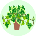 Money Money Plants Online