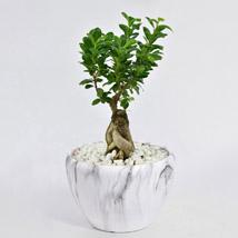 Bonsai Plant In Green Pot: Plants